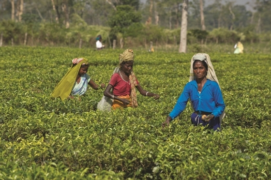 Many women in remote places work manual labor jobs since their childhood to provide for their families.
