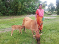 As a single mother, Gina is able to provide for her daughter's education by selling milk from the cow she received on International Widows' Day last year.