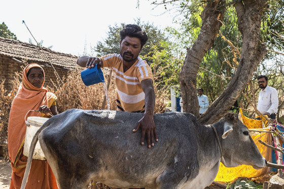 When Tavish (pictured) received a cow at a GFAsupported gift distribution, which later gave them a calf, the future of his family changed. Selling milk each day has provided Tavish a steady income—enough to send his children to school
