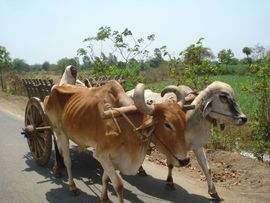Farming and agriculture still play a vital role in the economy of Central Gujarat.