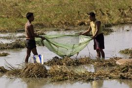 To provide a major supplement to their families' diet, Mising men use nets and bamboo baskets to catch fish and other water creatures in the ponds and streams near their villages.