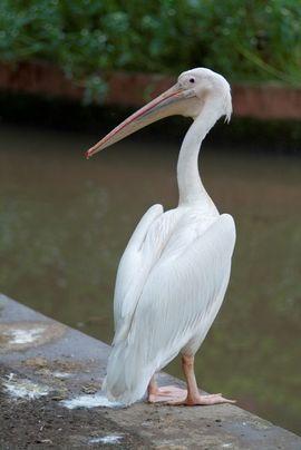 Beautiful and abundant wildlife draws many tourists to the Garo Region.