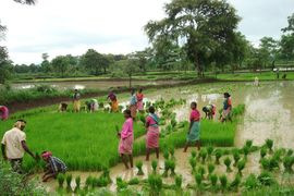 These villagers are working in a rice paddy. Agriculture is the main source of income in this region.