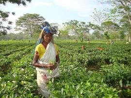 """In the """"Motherland of Tea,"""" a woman pauses from her long hours working on the plantation."""
