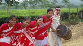 This group of young Adivasis performs a traditional cultural dance, with a famous tea field in the background.