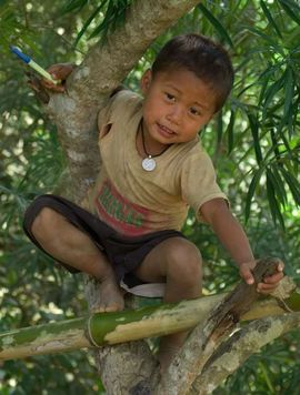 A young boy plays in a tree near his home in the hill forests of the Khagrachari Bangladesh Region.