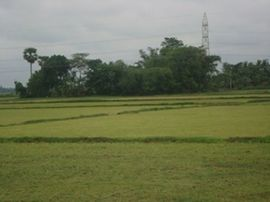 Rice paddies provide income and food for thousands who live in the Kharagpur Region.