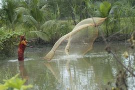 Many people feed their families and earn an income by fishing in the Kolkata Region's rivers and saltwater Sunderbans.
