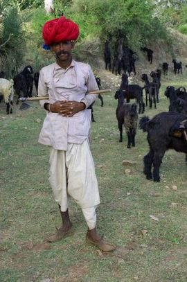 Herdsmen are a common sight in the North Rajasthan Region.