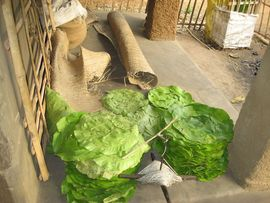 These large leaves will become disposable plates when the meal is served to visitors, who sit on the rolled-up mats.