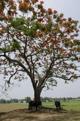 Beautiful landscape covers most of the Purulia Region.