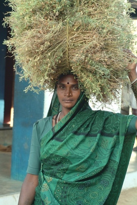 With 80 percent of Raipur's people engaged in agriculture, this young woman does her part as she carries crop stalks to be sold at the market.