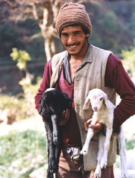 This man is one of many shepherds in the Shimla Region.