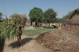 This South Haryana woman is barely visible beneath her heavy load. The majority of South Haryana's people live in small villages and work in agriculture.