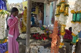 The South Karnataka Region is the hub of India's thriving flower production industry.