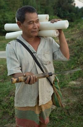 Like most tribals in the South Tripura Region, this man lives by what he can harvest from the jungle. Here he brings to market plantain from the tree's core cut with his knife.
