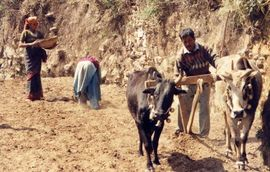 Farming is still a major source of income for the people in South Uttarakhand.