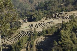 The hilly land in the Southwest Sikkim Region makes agriculture a challenge, but the people are able to cultivate corn in terraced hillsides like this one.