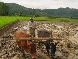 Fertile soils and abundant rainfall help make agriculture an important industry in Manipur.