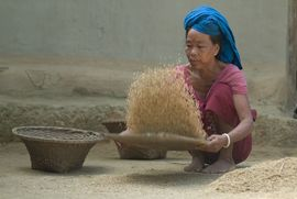 A tribal woman in the West Tripura Region cleans rice with a traditional bamboo winnowing plate.