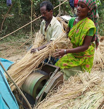 Batteuse pour rizière