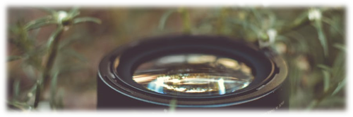 discipleship-blog-lens